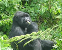 Birding Uganda safaris