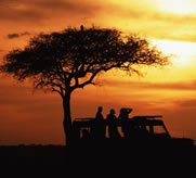 East African Safari at Sunset