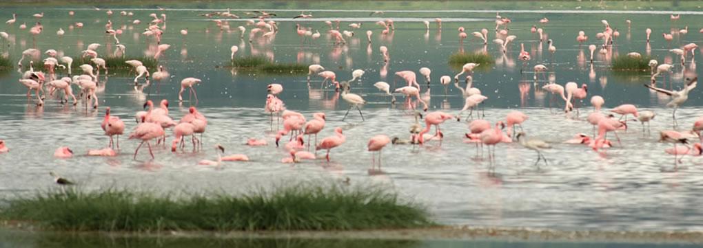 birding-safaris